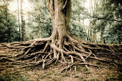 Gnarled Roots, Illinois